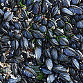 Mussels by Paul Williams