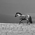 Mustang 2 Bw by Roger Snyder