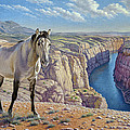 Mustang At Bighorn Canyon by Paul Krapf