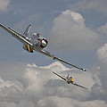 Mustang Pair by Pat Speirs