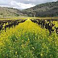 Mustard In The Vineyard by Bradley Bennett