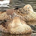 My Beak Is Cold by Lew Davis