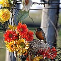 My Beautiful Nest by Image Takers Photography LLC - Carol Haddon