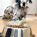 My Best Friend's Birthday by Alexey Stiop