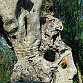 My Best Olive Tree Friend  Home Privat Spain Since 1999 by Colette V Hera  Guggenheim