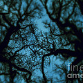 My Blue Dark Forest by Stelios Kleanthous