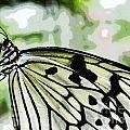 My Butterfly by Ben Yassa