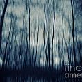 My Dark Forest by Stelios Kleanthous