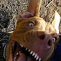 My Dog Smile by Bozena Simeth