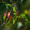My Dragonfly by Lorenzo Williams