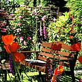 My Scottish Garden