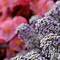 My Fair Flowers by Garrett T