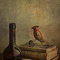 My Favorite Things by Terry Rowe