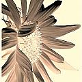 My First Sunflower by Jacqueline McReynolds
