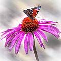 My Flower by Alex Hiemstra