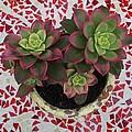 My Garden Series - Mosaica by Alison Stein
