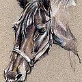 My Horse Portrait Drawing by Daliana Pacuraru