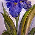 My Iris by Gerry High