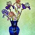 My Iris Vincent's Genius by Nikolyn McDonald