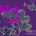 My Irises by Iris Gelbart
