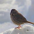 My Little Sparrow by Dora Sofia Caputo Photographic Design and Fine Art