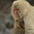 My Momma Snow Monkey by Robyn Saunders