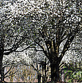 My Neighborhood In Spring by Lydia Holly