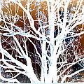 My Neighbor's Tree by Kathy Sampson
