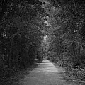My Pathway by Andrea Anderegg