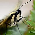 My Pet Butterlfy by Elaine Berger