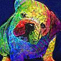 My Psychedelic Bulldog by Jane Schnetlage