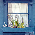My San Francisco Window Garden by Artist and Photographer Laura Wrede