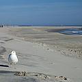 My Seagull Friend by Jennifer Ancker
