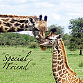 My Special Friend by Vi Brown