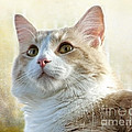 My Squishy by Ellen Cotton
