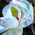 My Sweet Magnolia by Ella Kaye Dickey