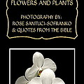 My The Bible Talks About Flowers And Plants Book by Rose Santuci-Sofranko