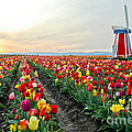 My Touch Of Holland 2 by Nick  Boren