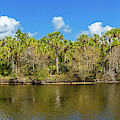 Myakka River From Jelks Preserve by Panoramic Images