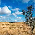 Mynydd Hiraethog by Adrian Evans