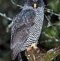 Mysterious Owl by Anthony Mercieca