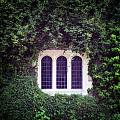 Mysterious Window by Joana Kruse