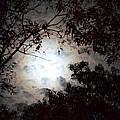 Mystery Of Moonlight by Maria Urso