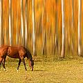 Mystic Autumn Grazing Horse by James BO Insogna