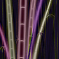 Mystic Bamboo by Matt Lindley