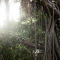 Mystic Jungle by Kathleen Odenthal
