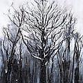 Mystic Winter by Melissa Torres
