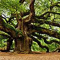 Mystical Angel Oak Tree by Louis Dallara