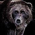 Mystical Bear by Athena Mckinzie