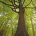 Mystical Forest Tree by Gill Billington
